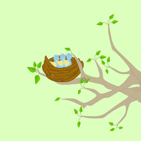 A tree with a bird nest with a Mother bird perching on a branch