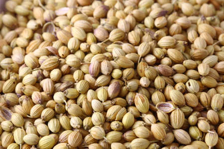 A close up of Coriander seeds  background