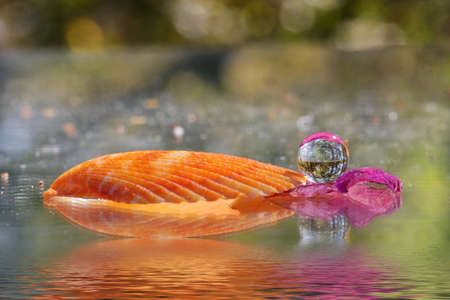 Reflective balls with reflection of trees and a sea shell