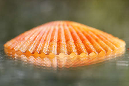 An orange shell with its reflection Stock Photo