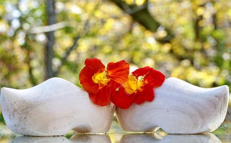 Dutch wooden shoes with nasturtium flowers