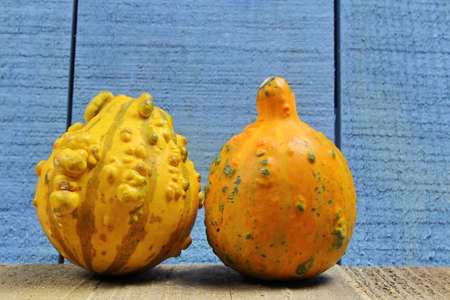 Top down view of a Squash with Oak leaves and copy space.