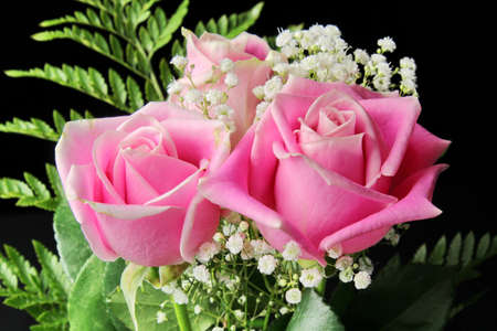 A close up of a Rose flowers 스톡 콘텐츠