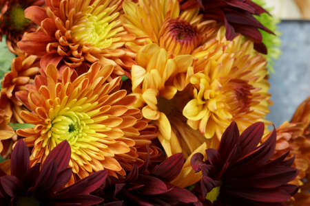 Close up of a bunch of Chrysanthemum flowers Stock Photo