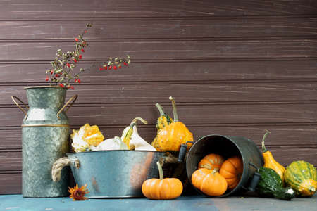 Still life of a Halloween and fall or Autumn decoration different kinds of squashes and Pumpkins. Stock Photo