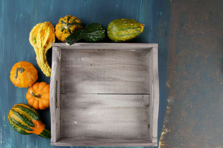 Overhead view of different kinds of Pumpkins or Squashes in a wooden tray with copy space. Stock Photo