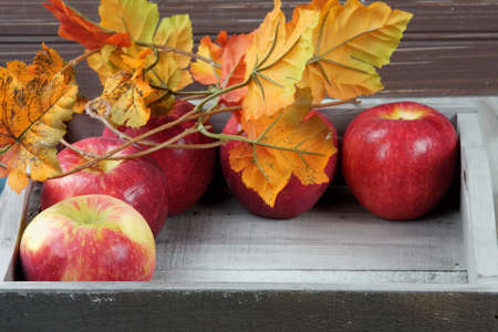Red apples in a tray with fall decoration and leaves.