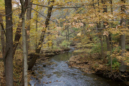 A creek in the fall season with fall leaves.