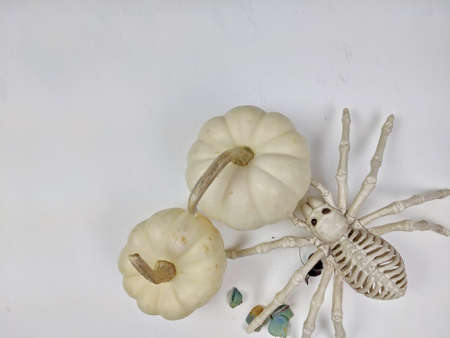 Top down view of White Pumpkins with a white spider skeleton for Halloween.