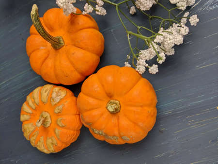 Top down view of Pumpkins still life in Autumn season.