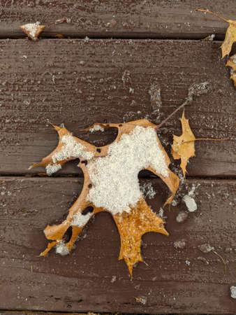 Oak leaf on a wooden Deck with snow in winter season Banco de Imagens