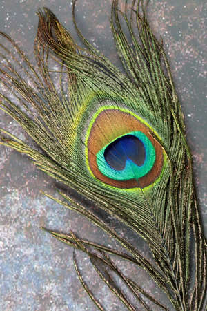 A close up of a Peacock feather on grunge background. Banco de Imagens