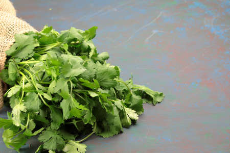 A bunch of fresh green Cilantro leaves wrapped in a burlap cloth on wooden background with copy space. Stock Photo