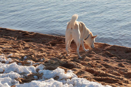 A Dog on the beach in winter season.