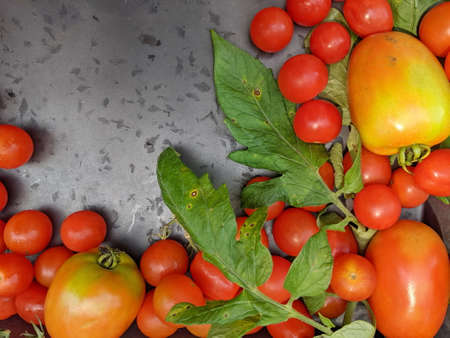 A variety of home grown red Tomatoes on a wooden background with copy space.