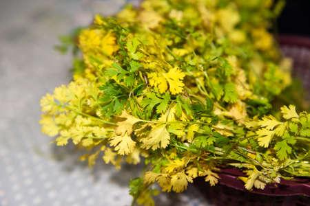 food preparation: Organic fresh cilantro leaves ready for food preparation Stock Photo