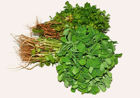 Good food habits-Healthy lifestyle-green herbs- in white background
