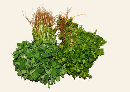 fenugreek: Healthy living-cilantro and fenugreek leaves in white background Stock Photo
