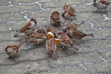 reportage: Sparrows, bread