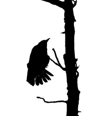 Raven on dead tree photo