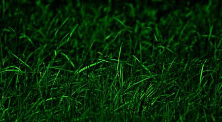 nightvision: Nightly lighted grass, closeup Stock Photo