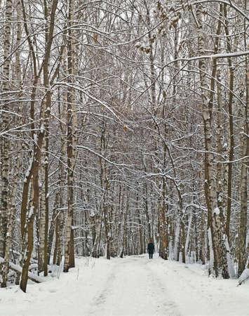 boles: lone man in wintry wood road
