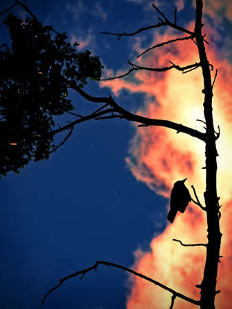 abstract; forest fire with a bird on tree photo