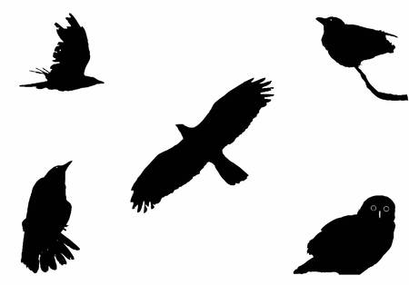 the big birds, silhouette set Vector