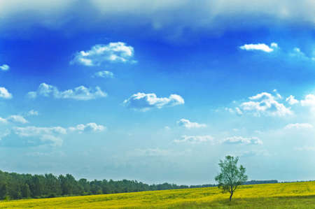 landscape with lone tree photo