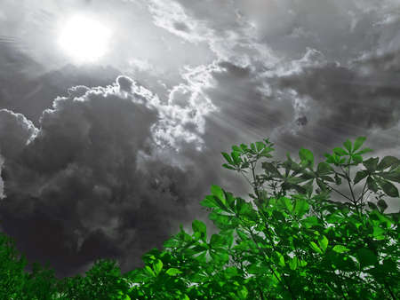 thicket: Stormclouds over thicket