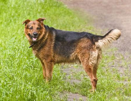 Wet dog on grass photo