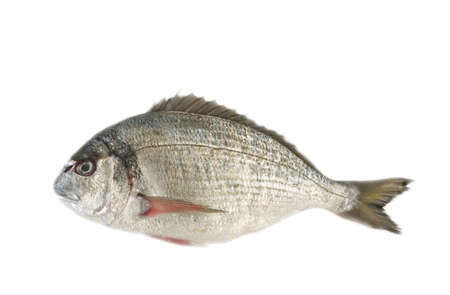 Sea fish, isolated  Stock Photo - 5439775
