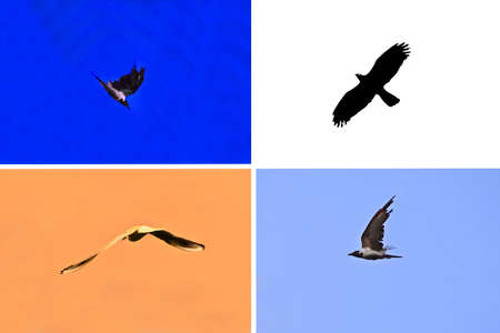 big birds, collage with colored backgrounds photo