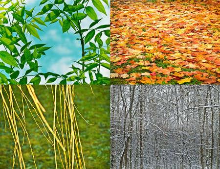cycles: les quatre saisons, nature de gros plan