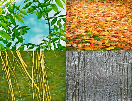 the four seasons, closeup nature photo