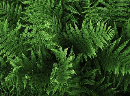 leafage: wild fern, closeup Stock Photo