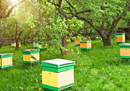 apiary: bee-garden  Stock Photo