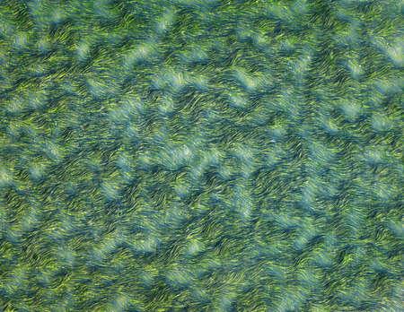 seaweeds: Seaweeds, background