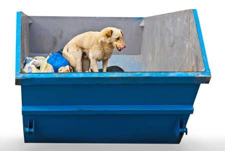 cull: dustbin Stock Photo