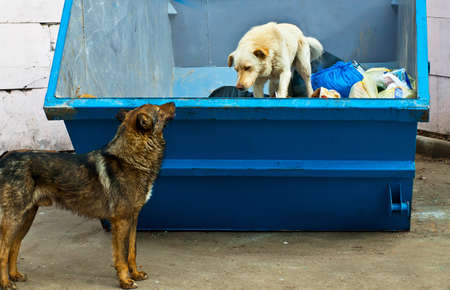 stray dog: dogs in dustbin Stock Photo