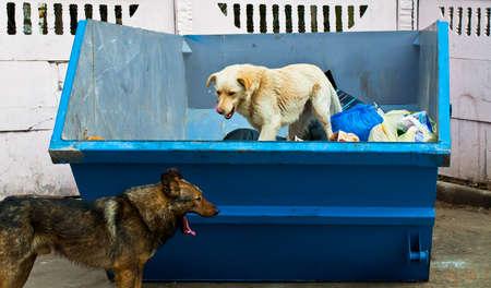 stray dog: dog in dustbin