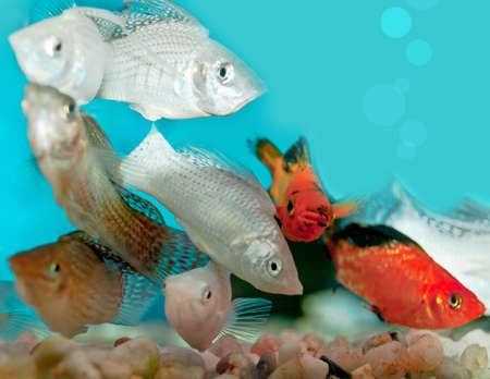 closeup of aquarium Stock Photo - 10501773