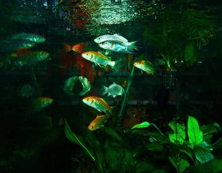 freshwater aquarium plants: petshops aquarium