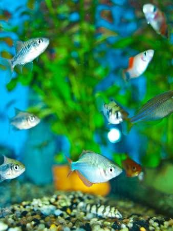 small fishes Stock Photo - 10501775