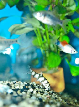 aquarium Stock Photo - 10501736