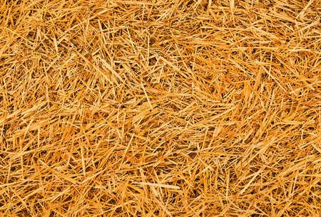 feedstock: straw background Stock Photo