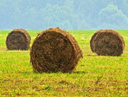 feedstock: field with hayricks