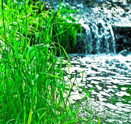 carex: grass near the brook