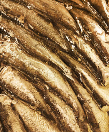 sprats: conserved smoked oily fish Stock Photo