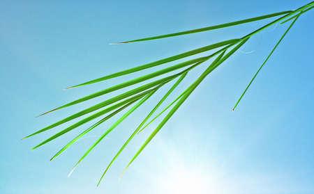 palmy: palm leaf, sunny sky Stock Photo